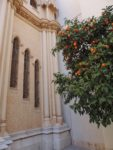 orange tree and church