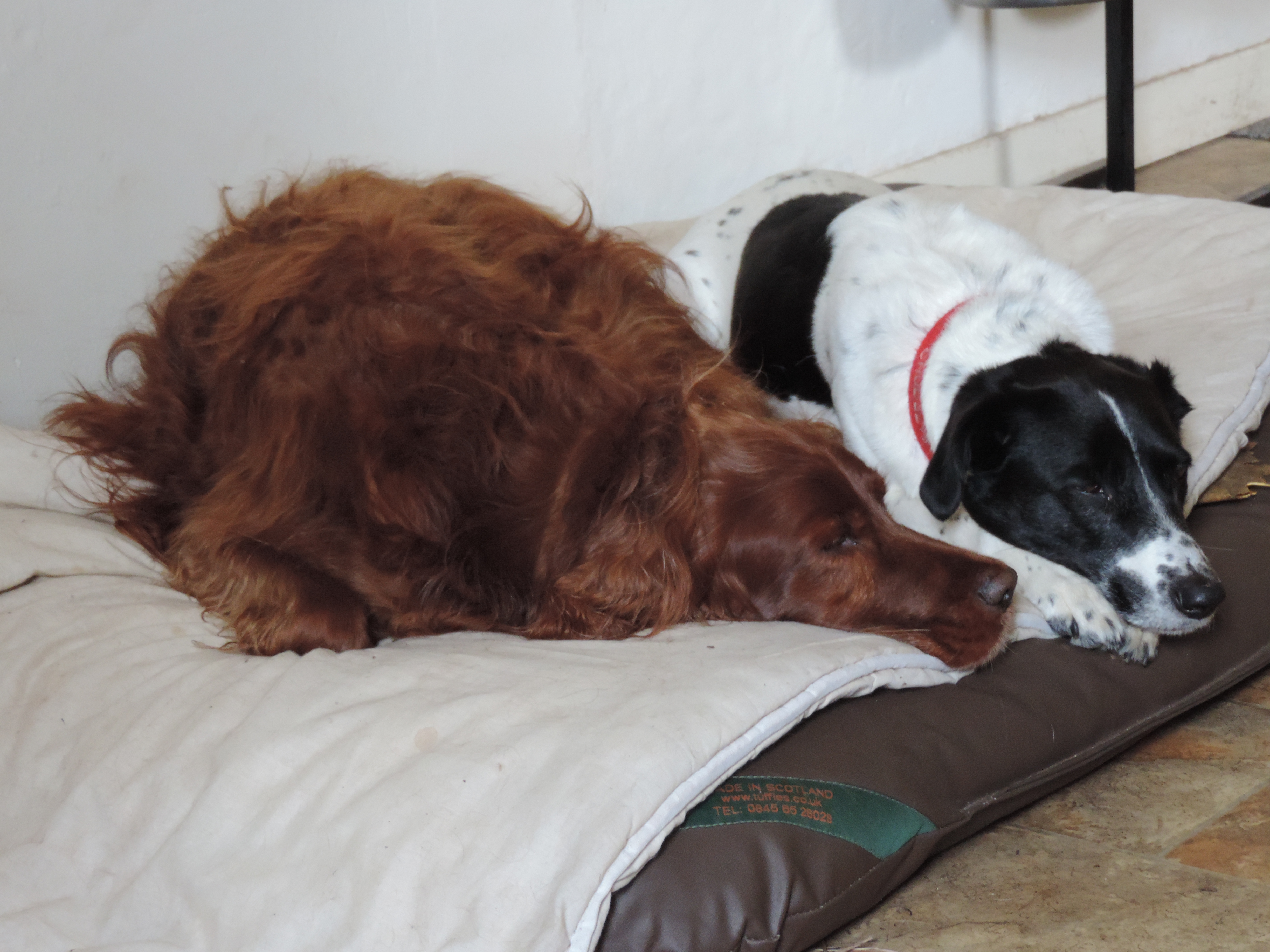 2 dogs resting