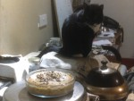 cat on aga and baking